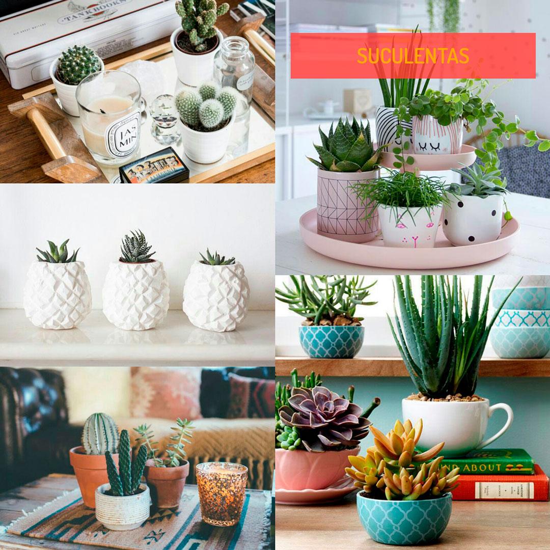 suculentas-planta-na-decoracao-grandes-inspiracao-um-cafe-pra-dois